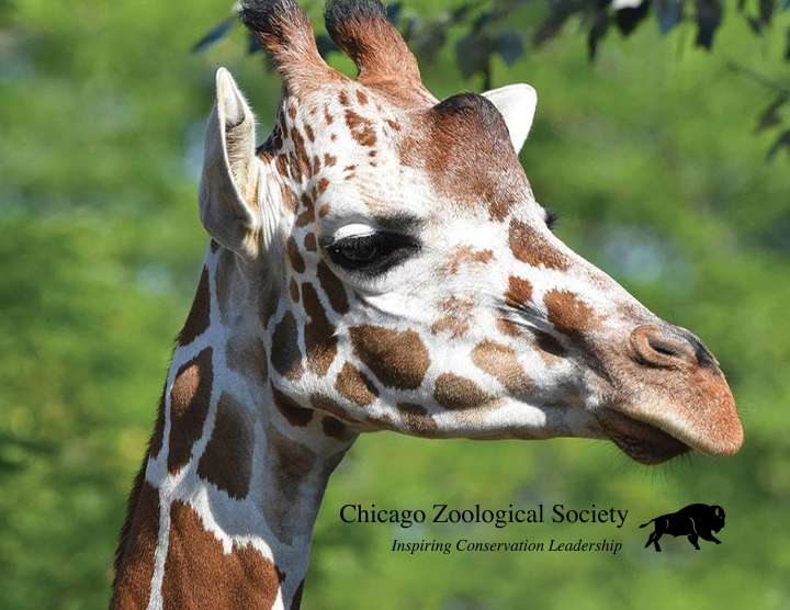 Recycle for a Reason: Chicago Zoological Society